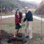 meus pais plantam uma paineira